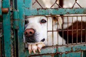 Clear the Shelters: Everything You Need to Know