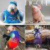 Petformers-Awards-Promo