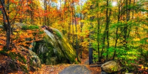 Health Trend: Forest Bathing